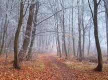 Misty trail in forest Stock Photos