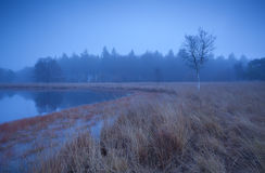 Misty tranquil weather on wild lake Royalty Free Stock Photo