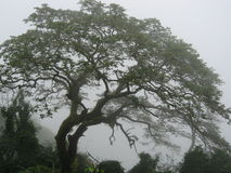 Misty Tree Stock Photography