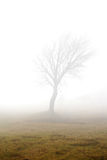 Misty Tree. Tree in the early morning mist Royalty Free Stock Photo