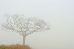 Misty Tree Royalty Free Stock Photos