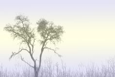 Misty Tree. A misty scene with a tree silhouette. And some grasses in the foreground stock illustration