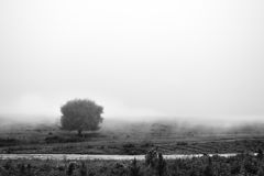 Misty tree 02 Royalty Free Stock Images