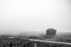 Misty tree Stock Photos