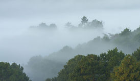 Misty tree forest on the mountain landscape Royalty Free Stock Image