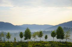 Misty tree on the mountain slope in a nature . Stock Photography