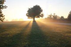 Misty Tree på soluppgång Arkivfoton