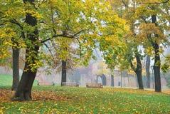 Misty Tree Park Royalty Free Stock Photos