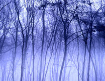 Misty Trees Stock Photography