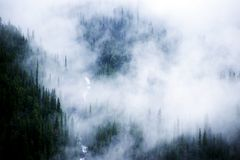 Misty Trees. This image was taken on the Icefield Parkway in Alberta Canada Stock Photography