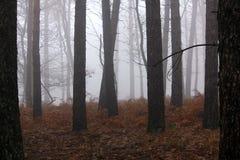 Misty Trees Stock Image