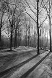 Misty trees stock photography