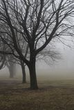 Misty trees. Trees in mist royalty free stock photos