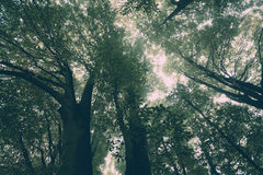 Misty trees above Royalty Free Stock Image