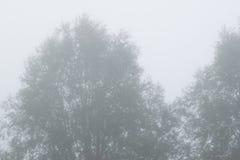 Misty Trees Early Morning Stock Afbeeldingen