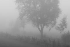 Misty Trees Early Morning Stockbild
