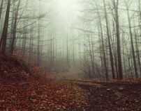 Misty Trees in Forest Royalty Free Stock Photography