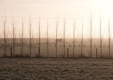 Misty Trees and horses. A group of horses seen though a set of trees on a misty, frosty morning in Downham, Norfolk, UK Stock Photo