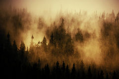 Misty treetops. Long shot of mist in the treetops in a forest in the Czech mountains Royalty Free Stock Images
