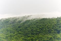 misty treetops Στοκ εικόνες με δικαίωμα ελεύθερης χρήσης