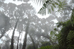 Misty tropical forest Royalty Free Stock Photos