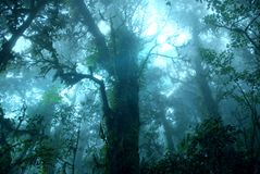 Misty tropical green rain forest, Ang Ka Nature Trail royalty free stock photo