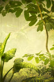 Misty Tropical Jungle Background Scene Stock Photos