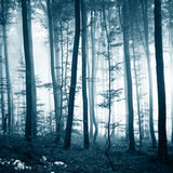Misty turquoise forest tree landscape. Misty turquoise blue light color foggy forest tree landscape background Stock Photography