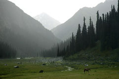 Misty valley. Midday weather in tien-shan valley Royalty Free Stock Photo