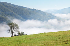 Misty view Royalty Free Stock Images