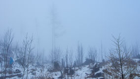Misty view of the rest of pine forest Stock Images
