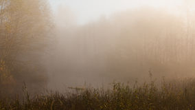 Misty view of sunlit trees Royalty Free Stock Photography