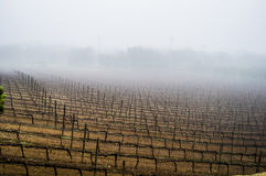 Misty Vineyard Royaltyfri Fotografi
