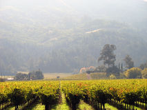 Misty Vineyard Morning Royalty Free Stock Photography