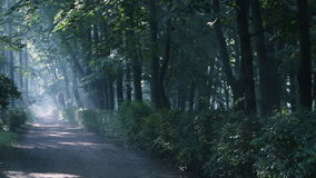 Misty walkway in the park, forest. Morning, Slanting rays of the rising sun. stock footage