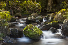 Misty Water Mountain Forest Stream photographie stock libre de droits