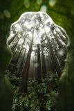 Misty wet rainforest with dominant tree