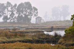 Foggy marshes in the morning Aveiro Portugal royalty free stock photography