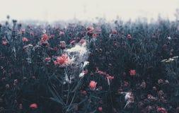 Misty Wild Flowering Meadow arkivbild