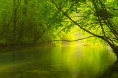 Misty wild river in the forest in spring Royalty Free Stock Photo