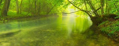 Misty wild river in the forest in spring Royalty Free Stock Images