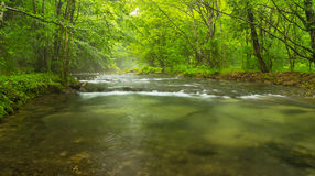 Misty wild river in the forest in spring Royalty Free Stock Photography