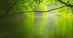 Misty Wild River In The Forest In Spring Stock Image