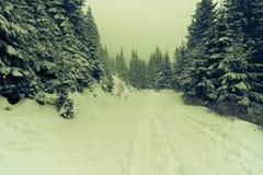 Misty winder landscape. Misty transylvanian winter forest landscape royalty free stock photos