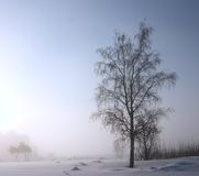 In a misty winter day Stock Photo