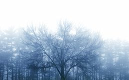 Misty Winter Day Stock Photography