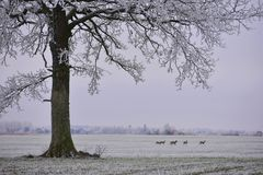 Misty winter day.Lonely tree on a field. royalty free stock photos