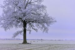 Misty winter day.Lonely tree on a field. stock photo