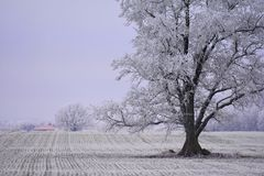 Misty winter day.Trees on a field. Stock Photos