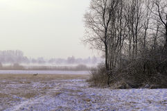 Misty winter field Royalty Free Stock Image